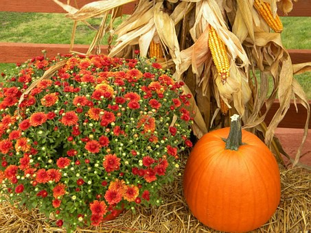 photo of Fall flowers and pumpkin