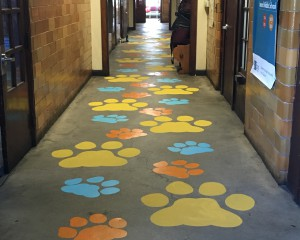 Hallway with paw prints in different colors painted onto the floor
